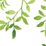 MN-008   Green Leaves